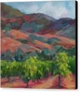 Calistoga Vineyards  Canvas Print