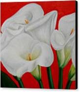 Calla Lillys  Canvas Print