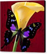 Calla Lily And Purple Black Butterfly Canvas Print by Garry Gay