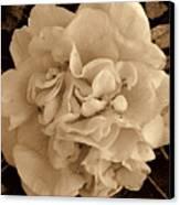 Camellia Sepia Canvas Print by Susanne Van Hulst