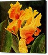 Canna Lilies Canvas Print by Vickie Voelz
