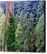Capilano Canyon Ivy Canvas Print by Will Borden