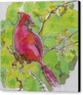 Cardinal In Palo Verde Canvas Print