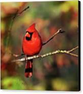 Cardinal Territory Canvas Print