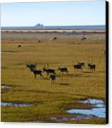 Caribou Herd Canvas Print