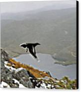 Carrawong In Flight Over Cradle Mountain Canvas Print