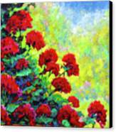 Cascade Of Geraniums Canvas Print