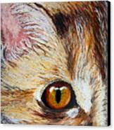 Cat Visions Canvas Print by Lorraine Foster