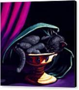 Catabat Nap Canvas Print