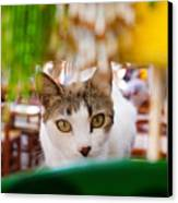 Cat's Eye On Me Canvas Print