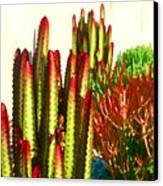 Catus Garden Canvas Print