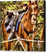 Cavalry Horse Circa 1864 Canvas Print