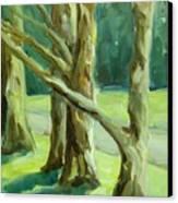 Cedars In Woodward Park Canvas Print