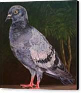 Central Park Visitor - Pigeon Canvas Print