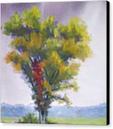 Changing Weather Changing Tree Canvas Print by Christine Camp