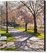 Charles River Cherry Trees Canvas Print by Susan Cole Kelly