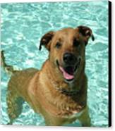 Charlie In Pool Canvas Print by Rebecca Wood