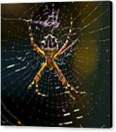 Charlotte's Web Canvas Print by Thanh Thuy Nguyen