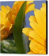 Cheerful Gerbera Daisies Canvas Print