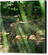 Cheetah On The In The Forest Canvas Print by Douglas Barnett