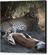 Cheetah With Kill Canvas Print