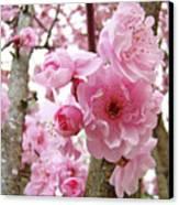 Cherry Blossoms Art Prints 12 Cherry Tree Blossoms Artwork Nature Art Spring Canvas Print