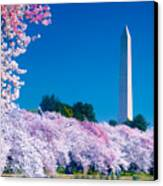 Cherry Blossoms Canvas Print by Don Lovett