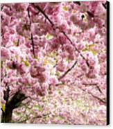 Cherry Blossoms In Milan Italy Canvas Print