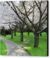Cherry Blossoms In Stanley Park Vancouver Canvas Print by Pierre Leclerc Photography