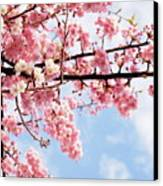 Cherry Blossoms Under Blue Sky Canvas Print by Neconote