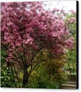Cherry Spring Blossom Canvas Print by Valia Bradshaw