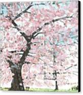 Cherry Trees Canvas Print by Patrick Grills