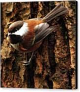 Chestnut-backed Chickadee On Tree Trunk Canvas Print