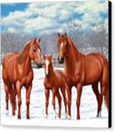 Chestnut Horses In Winter Pasture Canvas Print by Crista Forest