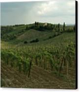Chianti Vineyards In Tuscany Canvas Print