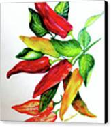 Chillies From My Garden Canvas Print by Karin  Dawn Kelshall- Best