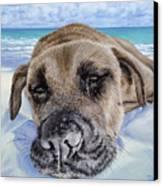 Chillin In Briland Canvas Print