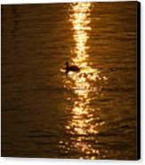 Chincoteague Bay Sunset Canvas Print