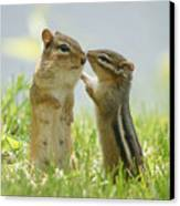 Chipmunks In Grasses Canvas Print by Corinne Lamontagne