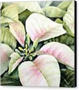 Christmas Poinsettias Canvas Print by Bobbi Price