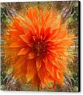 Chrysanthemum Canvas Print