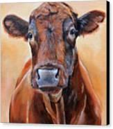 Cinnabar    Canvas Print by Laura Carey