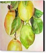 Citrons Canvas Print