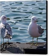 City Gulls Canvas Print