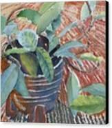 Clay Pot Canvas Print