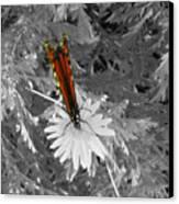 Cliff House Butterflies Lll Canvas Print
