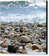 Close Up From A Beach Canvas Print