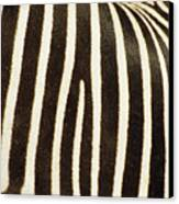 Close View Of A Zebras Stripes Canvas Print by Stacy Gold