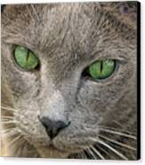 Clyde And His Green Eyes Canvas Print