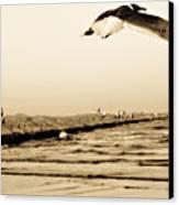 Coastal Bird In Flight Canvas Print